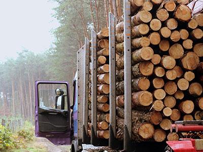 markets-timber5